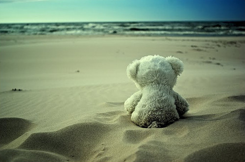 alone beach bear just wondering