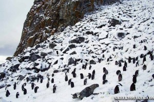 antarctica_penguins_052