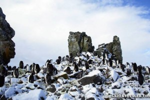 antarctica_penguins_055