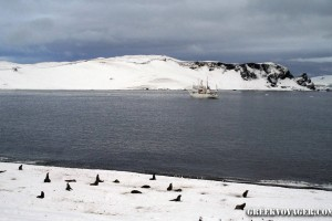 antarctica_penguins_058