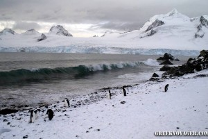 antarctica_penguins_060