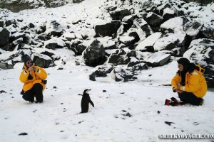 antarctica_penguins_061