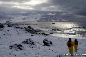 antarctica_penguins_062