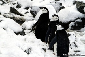antarctica_penguins_065