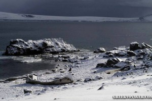 antarctica_penguins_066