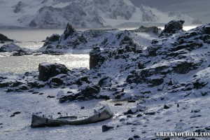 antarctica_penguins_067