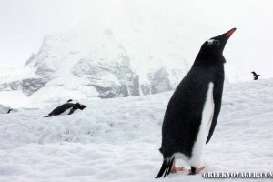 antarctica_penguins_089