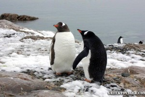 antarctica_penguins_094
