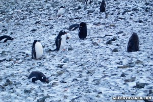 antarctica_penguins_201