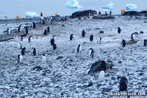 antarctica_penguins_202