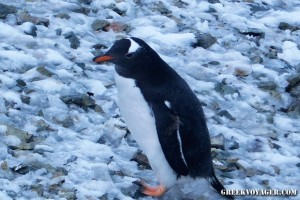 antarctica_penguins_205