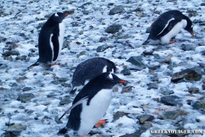 antarctica_penguins_207
