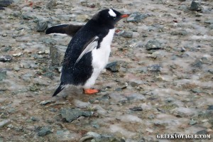 antarctica_penguins_210