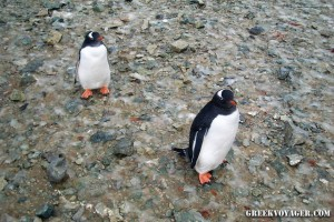 antarctica_penguins_213