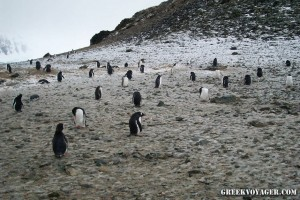 antarctica_penguins_214
