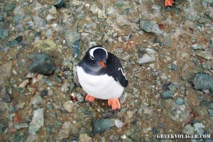 antarctica_penguins_215