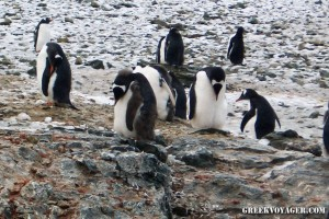 antarctica_penguins_220