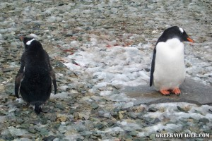 antarctica_penguins_222