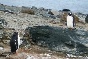 antarctica_penguins_223
