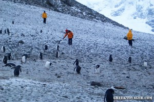 antarctica_penguins_225