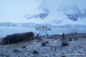 antarctica_penguins_226