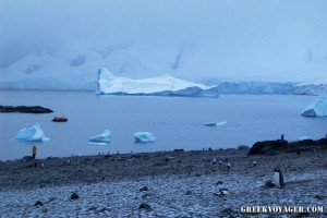 antarctica_penguins_227