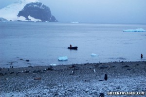 antarctica_penguins_228