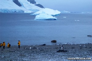 antarctica_penguins_229