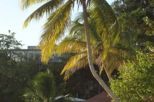martinique_017