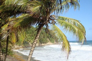 martinique_074