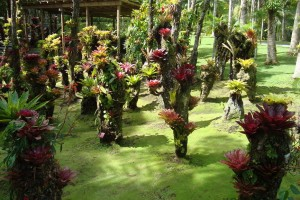 martinique_garden_202