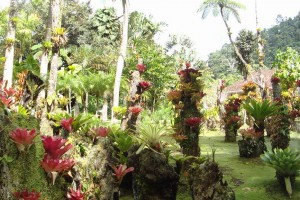 martinique_garden_205