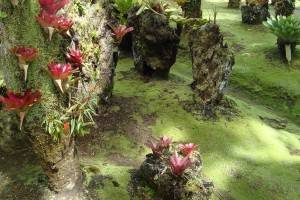martinique_garden_206