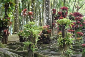 martinique_garden_208