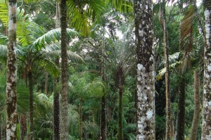 martinique_garden_209