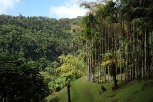 martinique_garden_213