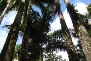 martinique_garden_214