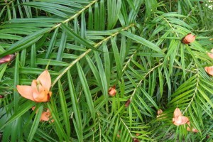 martinique_garden_215