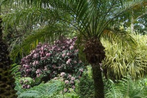 martinique_garden_216