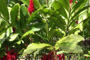 martinique_garden_217