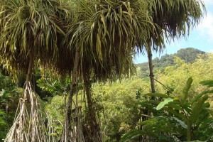 martinique_garden_218