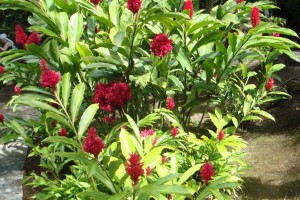 martinique_garden_219