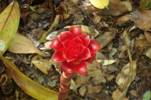 martinique_garden_228