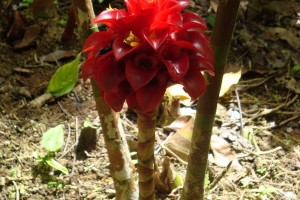 martinique_garden_230
