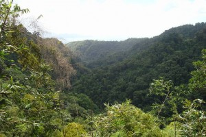 martinique_garden_232