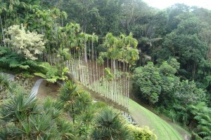 martinique_garden_233