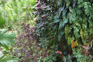martinique_garden_236
