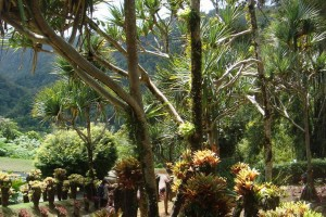 martinique_garden_239