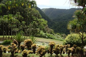martinique_garden_240