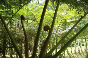 martinique_garden_243